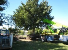 Kwikfynd Tree Management Services ballengarra